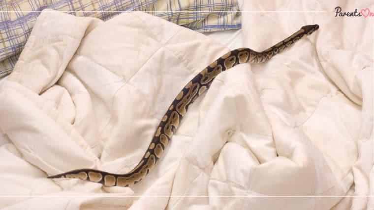 NEWS: เตือนพ่อแม่ ระวังงูซุกบนเตียง 'ฉก' ลูกน้อยในช่วงฤดูฝน
