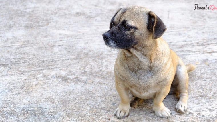 NEWS: พิษสุนัขบ้าคร่าชีวิตคนเป็นรายที่ 9 แล้ว! เตือนแค่ถูกลูกหมาข่วนอย่าชะล่าใจต้องรีบไปพบหมอ