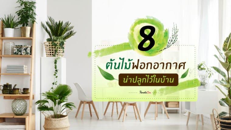 8 ต้นไม้ฟอกอากาศ ที่น่าปลูกไว้ในบ้าน