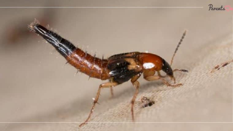 NEWS: กรมอนามัยแนะ ป้องกันสัตว์มีพิษในหน้าฝน ด้วยการจัดสภาพแวดล้อมบริเวณบ้านให้สะอาด