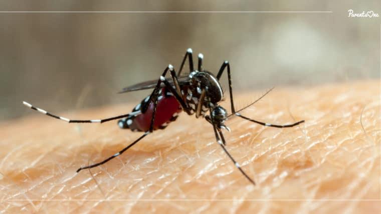 NEWS: กรมควบคุมโรคเตือนระวังโรคจากยุงลาย ใช้มาตรการ 3 เก็บ ป้องกัน 3 โรค