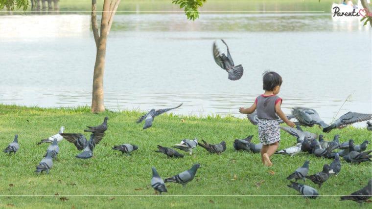 NEWS: พ่อแม่ระวังให้เด็กเล็กเล่นนกพิราบ เสี่ยงติดเชื้อราจากมูลนก