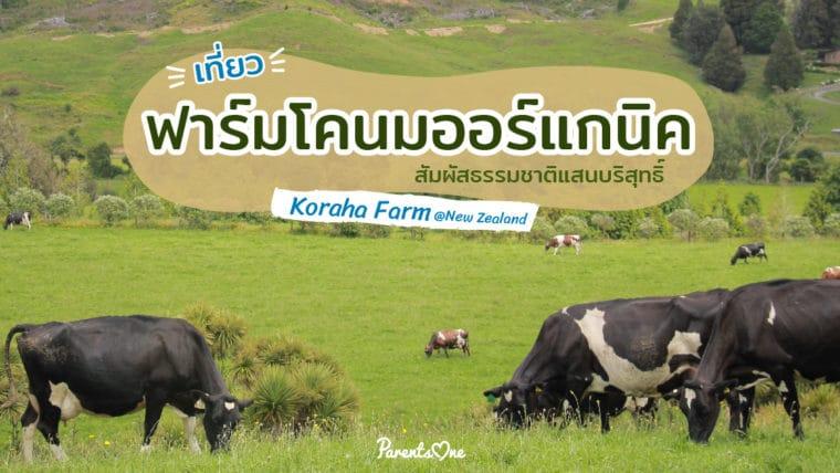 เที่ยวฟาร์มนมโคออร์แกนิค สัมผัสธรรมชาติแสนบริสุทธิ์ Koraha Farm @New Zealand