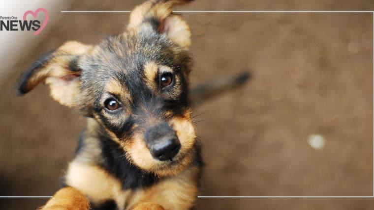 NEWS: พบผู้เสียชีวิตจากโรคพิษสุนัขบ้ารายแรกของปี