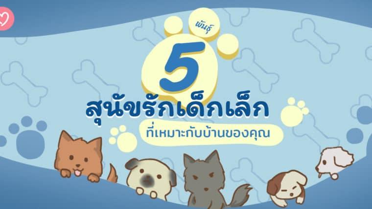 5 พันธุ์สุนัขรักเด็กเล็กที่เหมาะกับบ้านของคุณ