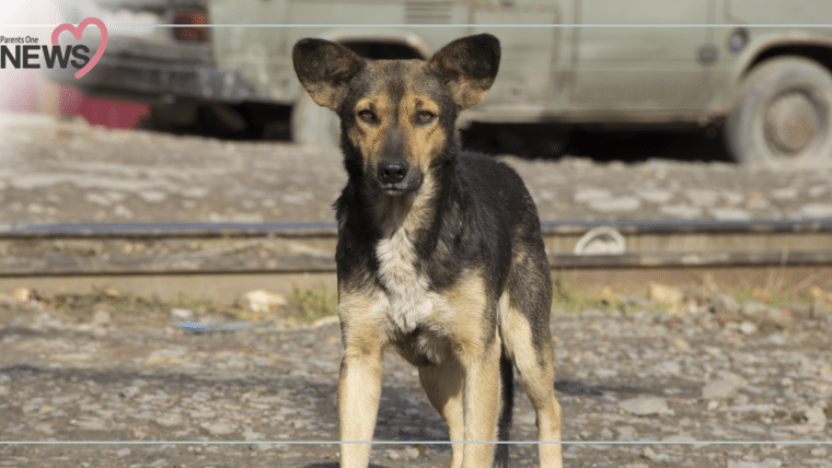 NEWS: เฝ้าระวัง พิษสุนัขบ้าระบาดที่นนทบุรี หลังกัดเด็กไปแล้ว 2 คน