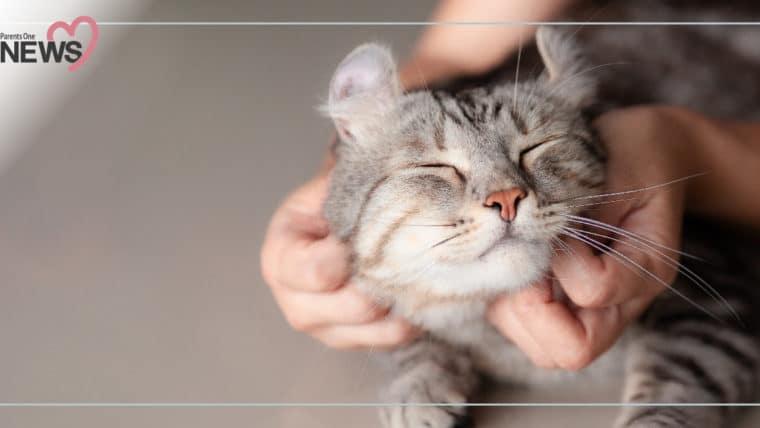 """NEWS: เล่นกับแมวต้องระวัง เสี่ยงติดเชื้อ """"ท็อกโซพลาสมา"""" โดยเฉพาะในเด็กและหญิงตั้งครรภ์"""