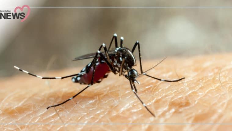 NEWS: พ่อแม่ต้องระวัง เด็กป่วยจากยุงลาย ป้องกันลูกด้วย 3 เก็บป้องกัน 3 โรค