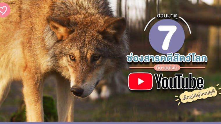 ชวนมาดู 7 ช่องสารคดีสัตว์โลกที่น่าสนใจใน Youtube เด็กดูได้ผู้ใหญ่ดูดี