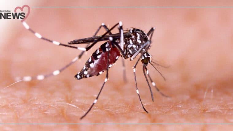 NEWS: ช่วงนี้ต้องระวัง โรคไข้ปวดข้อยุงลายระบาด ป่วยแล้วกว่า 4,307 ราย
