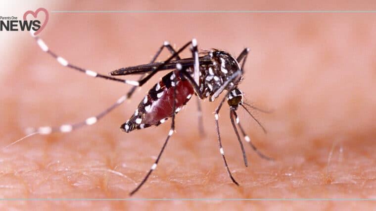 NEWS: ระบาดอย่างต่อเนื่อง โรคไข้ปวดข้อยุงลายระบาด ป่วยแล้วกว่า 5,728 ราย