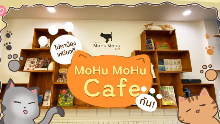 ไปหาน้องเหมียวที่ MoHu MoHu Cafe กัน!