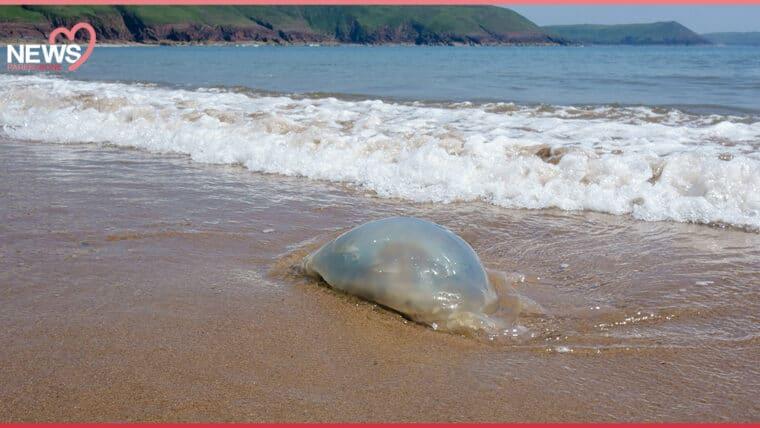 NEWS: ไปเที่ยวทะเลต้องระวัง เด็กโดนแมงกะพรุน บาดเจ็บนับสิบราย