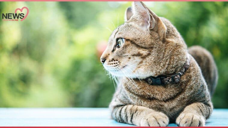 NEWS : แพทย์เตือน แมวอาจนำโรคเชื้อราแมวติดเด็กได้ หลังเลี้ยงแมวแล้วเกิดผื่นแดงทั่วใบหน้าและลำตัว