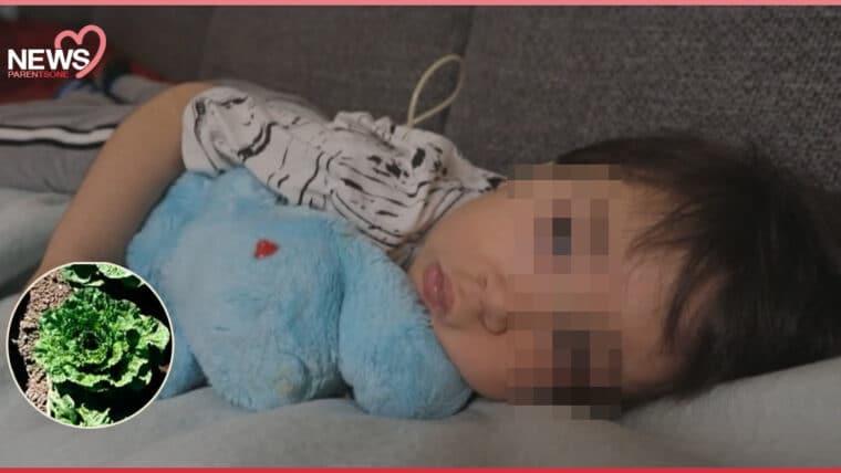 NEWS: เด็กอเมริกาไตและสมองเสียหาย จากเชื้ออีโคไล ที่ปนเปื้อนในผักกาดหวาน